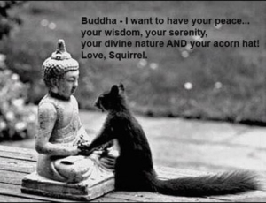 squirrel buddha photo