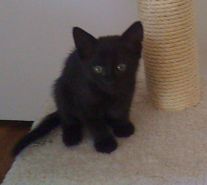 black kitten6 - Copy